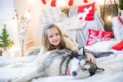 Милая девушка имея потеху дома с Malamute собаки дома в украшенной комнате стоковая фотография rf