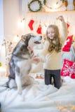 Милая девушка имея потеху дома с Malamute собаки дома в украшенной комнате стоковое изображение rf