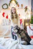 Милая девушка имея потеху дома с Malamute собаки дома в украшенной комнате стоковые изображения
