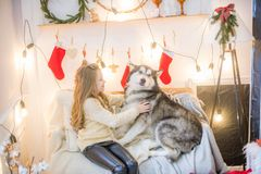 Милая девушка имея потеху дома с Malamute собаки дома в украшенной комнате стоковая фотография