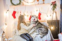 Милая девушка имея потеху дома с Malamute собаки дома в украшенной комнате стоковые фотографии rf