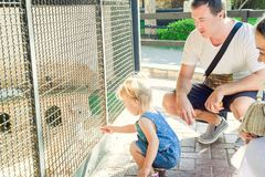 Милая девушка ребенка малыша и ее родители подавая кролики сидя в клетке на зоопарке или скотном дворе потеха ягнится напольное R Стоковые Изображения RF