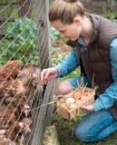Милая женщина фермера женщины собирая свежие яичка в корзину на h стоковые фотографии rf