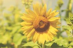 Милая жизнерадостная девушка играя на луге, поле redhead Красивая маленькая девочка в луге около солнцецветов и усмехаться мягко стоковое фото rf