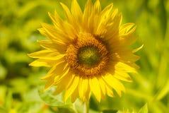 Милая жизнерадостная девушка играя на луге, поле redhead Красивая маленькая девочка в луге около солнцецветов и усмехаться мягко стоковые изображения rf