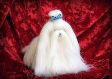 Милая игрушка мальтийсной собаки на красной предпосылке Стоковое Изображение