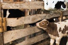 Милая икра на ферме стоковые фотографии rf