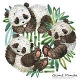 Милая иллюстрация акварели панды шаржа Стоковые Фотографии RF