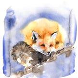Милая иллюстрация акварели с оранжевой красной лисой Пушистый зверь спит сладко бесплатная иллюстрация