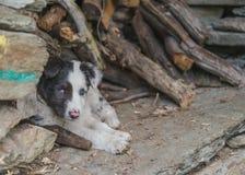 Милая и небольшая собака щенка клала вниз