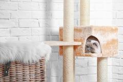 Милая киска на дереве кота Стоковые Фотографии RF