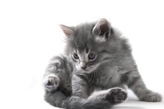 милая киска Стоковая Фотография RF