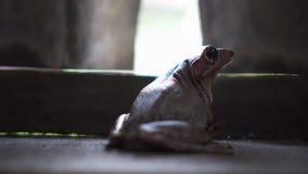 Милая лягушка как раз стоя все еще на деревянном доме r photogenic 4 акции видеоматериалы