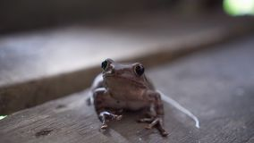Милая лягушка как раз стоя все еще на деревянном доме 2 сток-видео