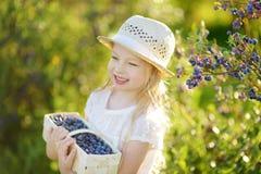 Милая маленькая девочка выбирая свежие ягоды на органической ферме голубики на теплый и солнечный летний день Стоковое Фото