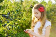 Милая маленькая девочка выбирая свежие ягоды на органической ферме голубики на теплый и солнечный летний день Свежие здоровые нат Стоковые Изображения