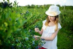 Милая маленькая девочка выбирая свежие ягоды на органической ферме голубики на теплый и солнечный летний день стоковые изображения rf