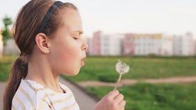 Милая маленькая девочка дуя на одуванчике на лужайке города акции видеоматериалы