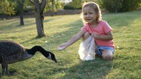 Милая маленькая девочка подавая одичалые гусыни на зеленом луге лета Стоковые Фотографии RF