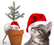 Милая маленькая мышь и кот с крышками santa стоковая фотография rf