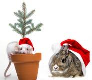 Милая маленькая мышь и кролик с крышками santa стоковые изображения rf