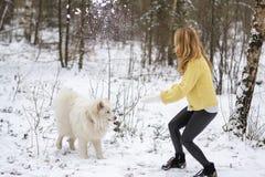 Милая молодая женщина в игре Forest Park зимы Snowy идя с ее Samoyed собаки белым стоковые фотографии rf