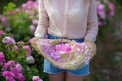 Милая молодая нежная женщина идя в поле роз чая Джинсы белокурой дамы нося и ретро шляпа наслаждаются летним днем стоковое фото