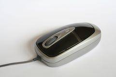 милая мышь Стоковая Фотография RF