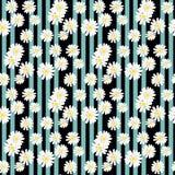 Милая предпосылка eps10 флористической печати маргаритки безшовная стоковое изображение
