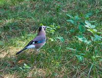 Милая птица на земле стоковые изображения