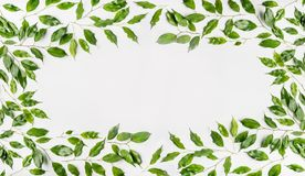 Милая рамка сделанная из зеленых ветвей и листьев на белой предпосылке Плоское положение, взгляд сверху, горизонтальное Стоковое фото RF