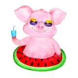 милая свинья Иллюстрации акварели нарисованные вручную стоковое фото rf