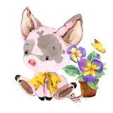 милая свинья иллюстрация животного акварели шаржа Стоковая Фотография