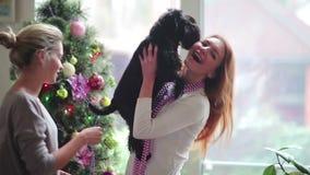 Милая собака взятия девушки на руках приближает к рождественской елке сток-видео