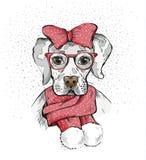 Милая собака девушки в шарфе зимы и красный смычок на своей голове Собака родословной Лабрадор Стоковые Фото
