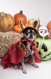 Милая собака дьявола Halloween Стоковые Фото