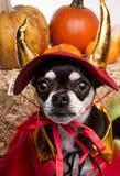Милая собака дьявола Halloween Стоковое Изображение