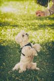 Милая собака прося еда стоковое фото rf