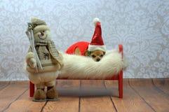 Милая собака Санты Стоковое Изображение RF