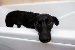 Милая собака стоя в ванне ждать быть помытым Стоковые Изображения
