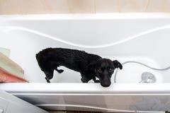 Милая собака стоя в ванне ждать быть помытым Стоковое фото RF