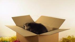 Милая собака щенка сидит в пересылая коробке с украшениями рождества и Нового Года Стоковые Изображения