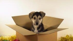 Милая собака щенка сидит в пересылая коробке с украшениями рождества и Нового Года Стоковое Изображение RF