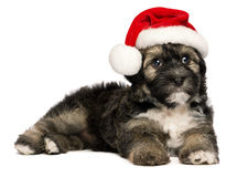 Милая собака щенка Havanese рождества с шлемом Санта Стоковое фото RF