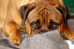 милая собака Стоковое фото RF