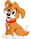 милая собака Стоковое Изображение RF