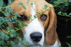 Милая собака Стоковые Фотографии RF