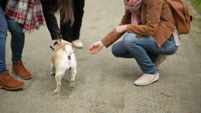 Милая старуха встречает ее зрелых дочерей в парке Счастливая семья идет вместе с маленькой собакой Outdoors сток-видео