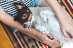 Милая счастливая смешная собака в оружиях его хозяйки стоковые изображения