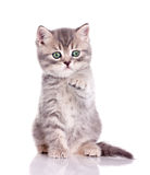 милая удерживания котенка лапка вне Стоковые Изображения
